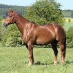 乗馬と海外旅行保険